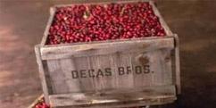 decas_logo